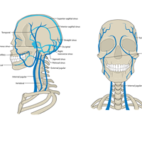 Venous Head And Neck MU